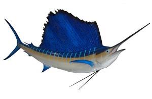 espadon voilier sailfish