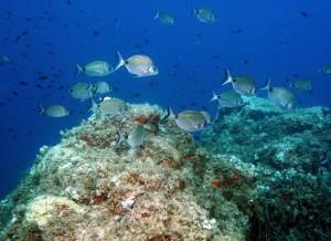 Fond marin en Méditerranée
