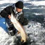 Brochet à la pêche au trou