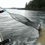 phoque attaque un pêcheur