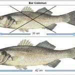 Taille légale des poissons de mer