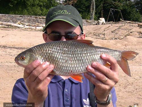 pêche du gardon au feeder