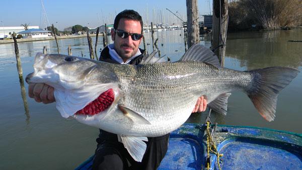 pêche d'un loup de 11,2 kilos
