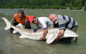 esturgeon blanc pêche