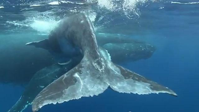 vidéo sous marine baleine