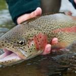 Fermeture de la pêche 2012