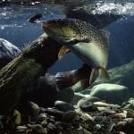 Ouverture de la pêche à la truite 2015