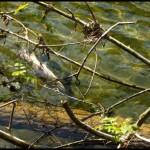 Alerte pollution sur les rivières jurassiennes