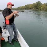 vidéo pêche silure