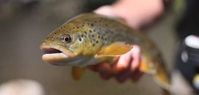 vidéo pêche mouche