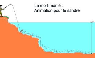 animation sandre mort-manié