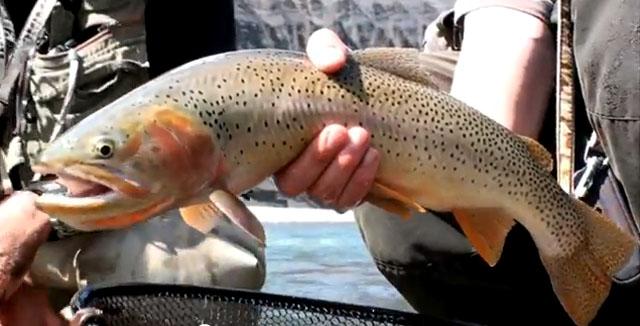 no kill pêche truite