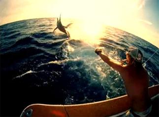 pêche de l'espadon en Australie