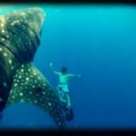 Pêche au gros et nage avec un requin baleine