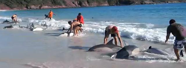 dauphins sauvés au Brésil