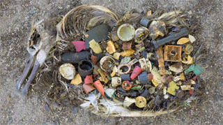 albatros pollution plastique Midway
