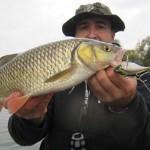 Découvrez la pêche au poisson nageur