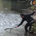 Culture Fish 2