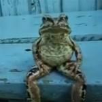 La grenouille assise comme un humain