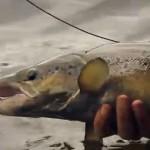 La pêche en Suède #5
