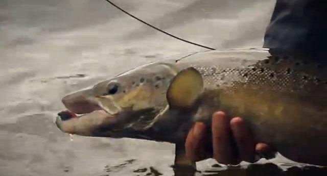 pêche du saumon au streamer en Suède