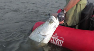fishing tarpon in float tube