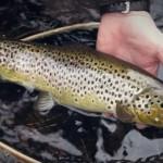 La pêche en Suède #2