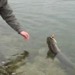 Culture Fish 5