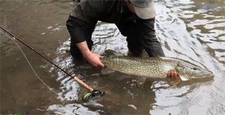 pêche brochet à la mouche