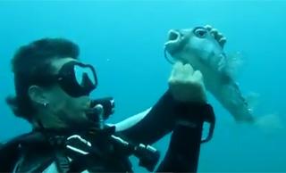 plongée poisson globe