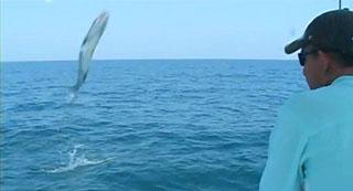 saut de barracuda