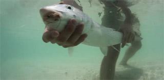 pêche bonefish à la mouche
