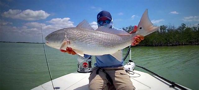 pêche du redfish à la mouche en Floride