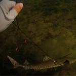 sauvatage d'un requin