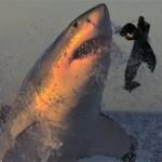 Attaques de requins en slow motion