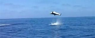 saut de requin mako