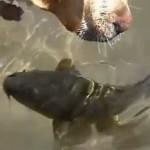 Un chien qui joue avec un poisson !