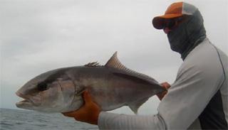 pêcheur de sériole