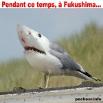 requin mouette