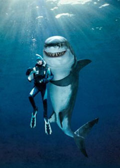 requin amusant