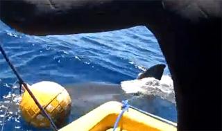 aileron de requin devant bateau