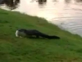 alligator vole poisson à petite fille