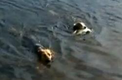un chien pêche un poisson