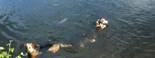 chien qui pêche