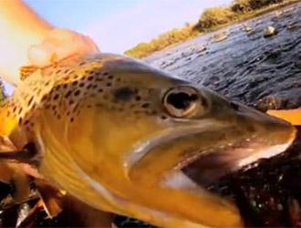 pêche de la truite dans le Montana