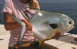 poisson permit