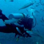 plongeur poissons