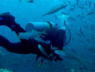 un plongeur entouré de milliers de poissons
