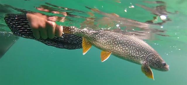 truite de lac au Canada