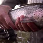 pêche truite Canada
